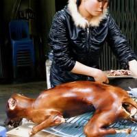 carne de caine